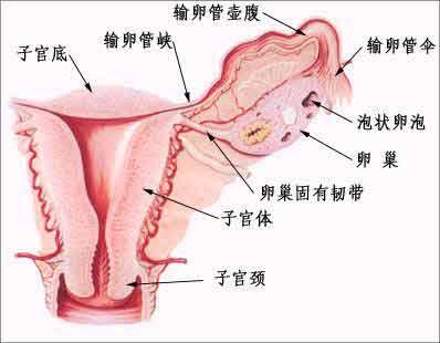 输卵管造影检查痛不痛?