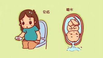 孕妇产前征兆有哪些?插图