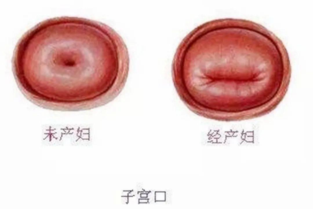 实说女性宫颈每天的变化过程