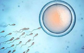 排卵期感冒怎么办 此时最好不受孕