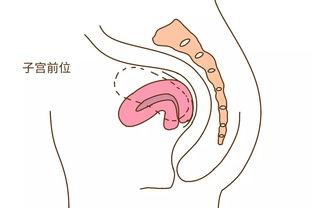 怀孕这3个部位疼 说明你缺钙了